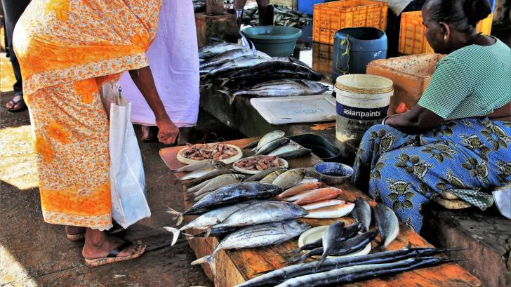fish market in sri lanka