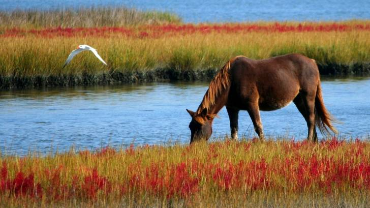 wild horse by water