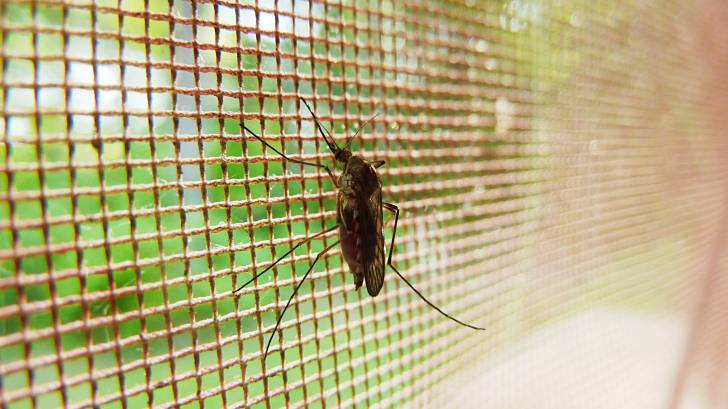 mosquito netting with a mosquito on it