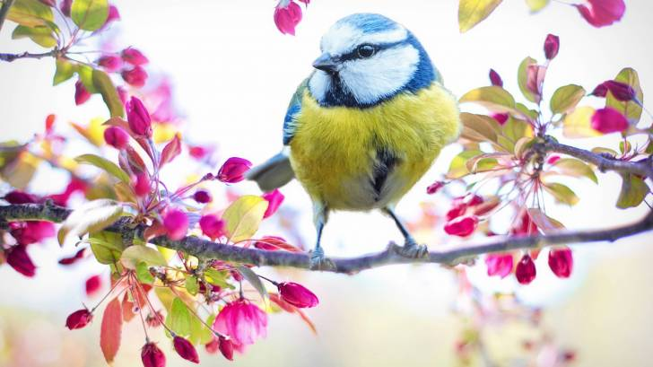 bird in a spring flowery tree