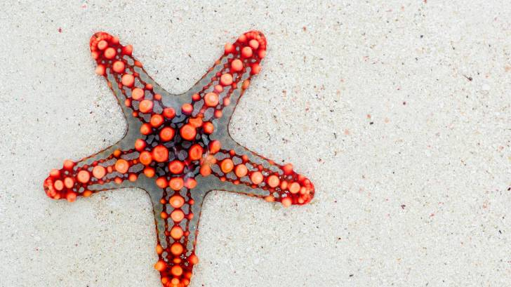 red five point star