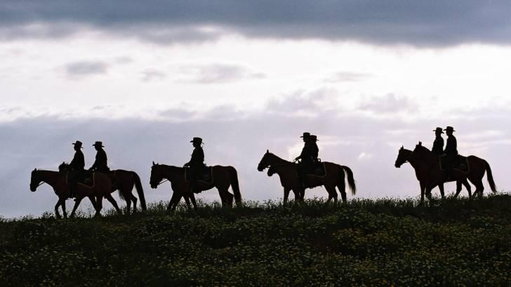 texas cowboys on horse bck riding at dusk