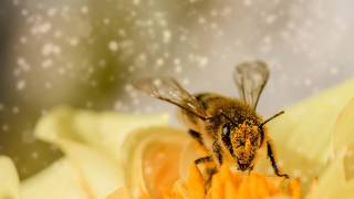 bee on a flower with pollen