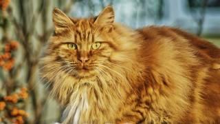 beautiful cat in sun