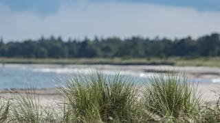 sand beach with dunes