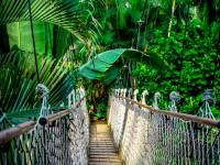 amazon forest with suspension bridge