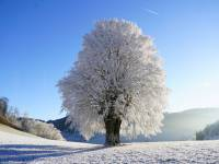 cold winter day with tree covered in snow