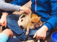 Kids petting zoo